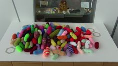 Mycobacterium tuberculosis (or TB) #microbes - these normally go for the lungs, but can also affect other organs  http://www.glasgowcityofscience.com/get-involved/knitting-microbes