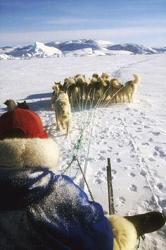 Dogsledging in Greenland.  Photo: Wedigo Ferchland