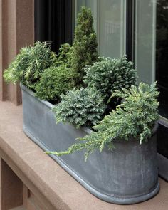 Brighten every corner of your yard from spring to fall by potting low-maintenance dwarf conifers.