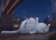Pencil Art Drawings, Cute Drawings, Snowball Rabbit, Secret Life Of Pets, Cartoon Gifs, Cartoon Wallpaper, My Animal, Kittens Cutest, Cute Animals