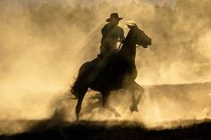 30 Stunning Photos From National Geographic's Traveler Photo Contest 2014 National Geographic Photo Contest, American Stock, 365 Photo, Wild Horses, Photos Du, Horse Riding, Belle Photo, Travel Photos, The Incredibles