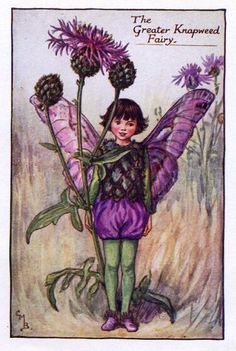 Greater Knapweed Flower Fairy Vintage Print, Cicely Mary Barker- printed c.1927 – The Greater Knapweed Fairy is one of Cicely Barkers Summer Flower Fairies.