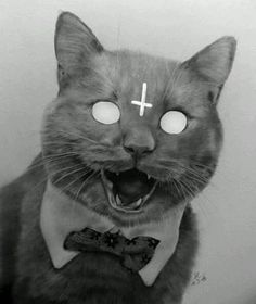 Dats my cat