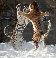 Cat fight...