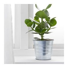 SOCKER Plant pot, galvanized indoor/outdoor, galvanized - IKEA