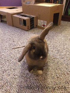 Welcome to my humble abode, human! - April 4, 2015
