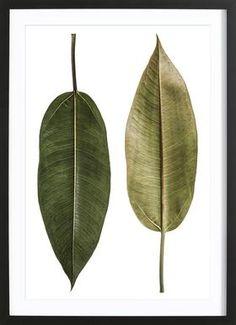 Leaf Study 5 - Shot By Clint - Affiche sous cadre en bois