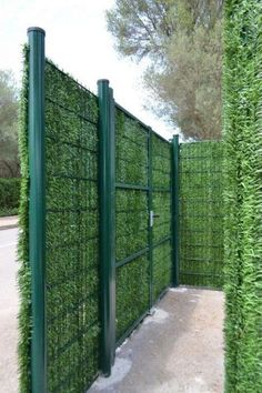 Cheap Privacy Fence, Privacy Fence Designs, Backyard Privacy, Backyard Fences, Backyard Landscaping, Garden Fences, Privacy Trees, Cheap Fence Ideas, Privacy Hedge