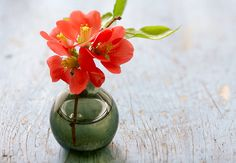Bring a bit of spring indoors. Flowering quince is a guaranteed head turner.