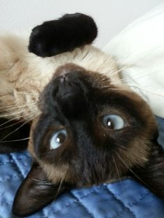 Up side down kitty