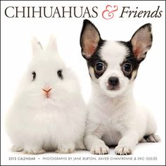 Chihuahuas & Friends Wall Calendar: The Chihuahuas & Friends Calendar is different: unlike other Chihuahua calendars, it features Chihuahuas paired in interesting combinations with adorable baby animals and unusual critters.  $13.99  http://calendars.com/Chihuahuas/Chihuahuas-and-Friends-2013-Wall-Calendar/prod201300000954/?categoryId=cat10126=cat10126#