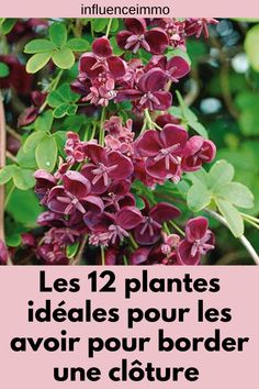 The 12 ideal plants to have them to border a fence – Flower Garden Potager Garden, Herb Garden, Garden Plants, House Plants, Garden Party Decorations, Plantar, Green Life, Permaculture, Horticulture