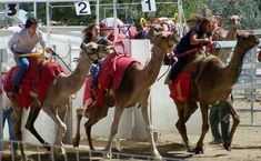 Skip Las Vegas and Bring the Kids to See Camels in Virginia City - LasVegasFamily Holidays.com