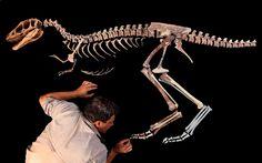 troodon skeleton