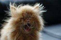 whiskers akimbo
