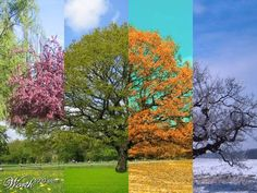#season #the beauty of nature #magic..Image 1 of 12