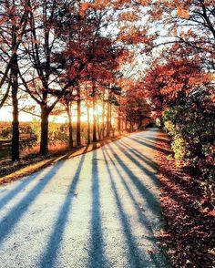 Autumn road (no location given) by Linda SV (@decoratordiva1)
