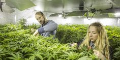 Whether Growers Like It Or Not, Sustainability Is The Future Of The Marijuana Industry