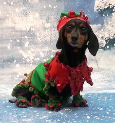 "Benjamin in his Christmas Elf Costume.  We call him ""Belf"""