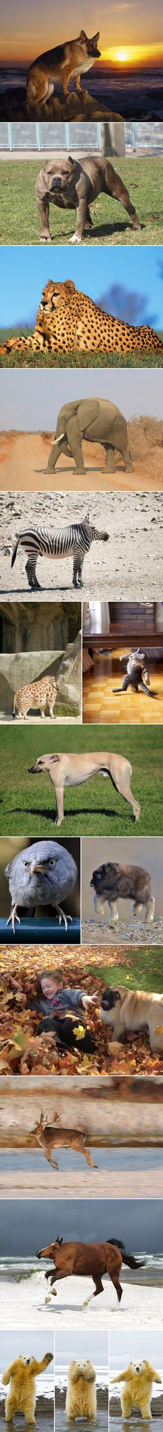 Animals minus necks