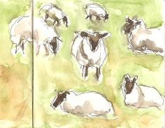 2016-03-06  Sheep in the field