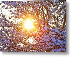 Snowy Tree Branches And Sunshine Metal Print By James Bo  Insogna #wallArt #insognaGallery