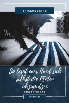 Ihr habt Pfotenabdrücke auf eurem Fußboden nach dem Spaziergang satt? Dann bringt eurem Hund doch diesen Trick bei, damit er sich selbst die Pfoten an der Fußmatte abputzt. Ein toller Hundetrick, der mit dieser Anleitung ganz leicht zu lernen ist. || #LokisLifeBlog #Hundetrick #Trickanleitung #Pfotenputzen #Hund Tricks, Movie Posters, Movies, Camping, Pets, Dog Care, Pooch Workout, Wild Animals, Campsite