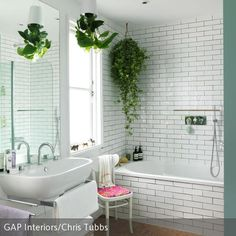 106 Besten Zimmerpflanzen Bilder Auf Pinterest In 2019 Planting
