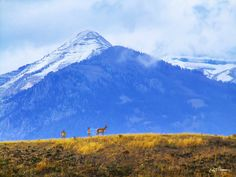 the area north of Jackson Hole, WY (USA) called Gros Ventre Junction