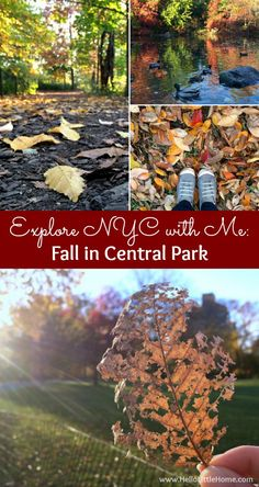 Come explore NYC with me and check out fall in Central Park! | Hello Little Home