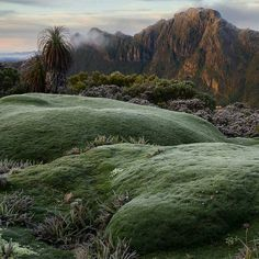 Watch where you step when in Tasmania, sometimes the ground beneath your feet might be alive. A giant Cushion Plant in South West Tasmania sent in by. Camping Spots, Camping Hacks, Lake George Camping, Colorado Springs Camping, Best Campgrounds, Little Island, Camping World, Tasmania, Bergen