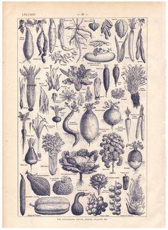 RESERVED for Kelsey 1922 Vintage VEGETABLES by sushipotvintage