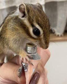 Cute Little Animals, Baby Animals, Funny Animals, Cute Squirrel, Squirrels, Animal Pictures, Cute Pictures, Funny Animal Videos, Chipmunks