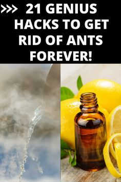 Diy Pest Control, Bug Control, Household Pests, Household Cleaning Tips, Killing Ants, Ant Bites, Ant Spray, Getting Rid Of Mice, Get Rid Of Ants