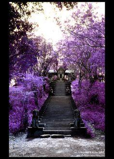 black stairs against purple flowers