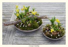 Afbeeldingsresultaat voor bloemschikken met bloembollen