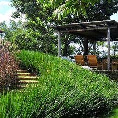 Área de estar. Escada de dormentes para chegar ao pergolado de estar. #projeto #alexhanazaki #hanazaki #paisagismo #arquitetopaisagista #jardins #flor #flores #jardim #natureza #paisagista #landscapearchitect #gardening #landscapedesign #garden #flower