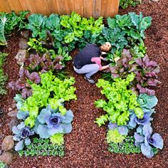 A keyhole edible garden layout is ideal for small yards