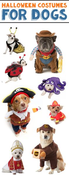 These Halloween costume ideas for both big and small dogs are so creative and funny. It's so easy to dress up your dog. Cute Easy Halloween Costumes, Cute Costumes, Dog Costumes, Halloween 2020, Halloween Ideas, Costume Ideas, Dog Rules, More Cute, Small Dogs