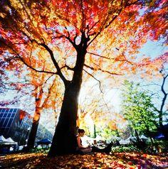 autumn, beautiful, colorful, colors, colours