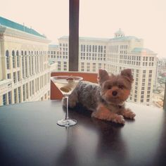 Carrie Bradshaw ain't got nothing on me. Vegas, I have arrived. #pebblestheceo #TSMagic