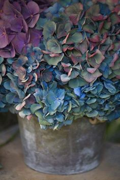 Don't you agree that hydrangeas are one of the most beautiful, and classic of all the flowers!!