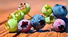 Gardening - Berries