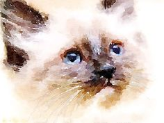 Art Watercolor print Siamese Ragdoll kitten artist by TulsaArt