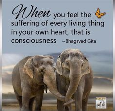 When you feel the suffering of every living thing in your own heart, that is consciousness the - Bhagavad Gita The Words, Gita Quotes, Sanskrit Quotes, Vegan Quotes, Vegetarian Quotes, Vegan Memes, Bhagavad Gita, Elephant Love, Elephant Quotes