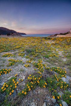 Cala Agulla Sunset   Mallorca, Spain