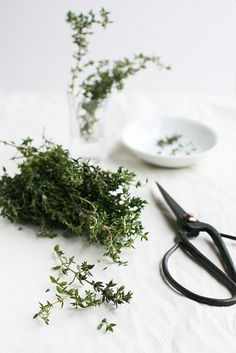 Day 5 - Thyme by snehroy, via Flickr