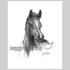 Arabian Colt Fine Art Note Cards  Set of EIGHT by glendaharlan