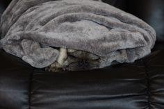 Hibernate - photo by Scott Duffus January