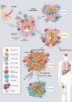 Neutralizing Tumor-Promoting Chronic Inflammation: A Magic Bullet?